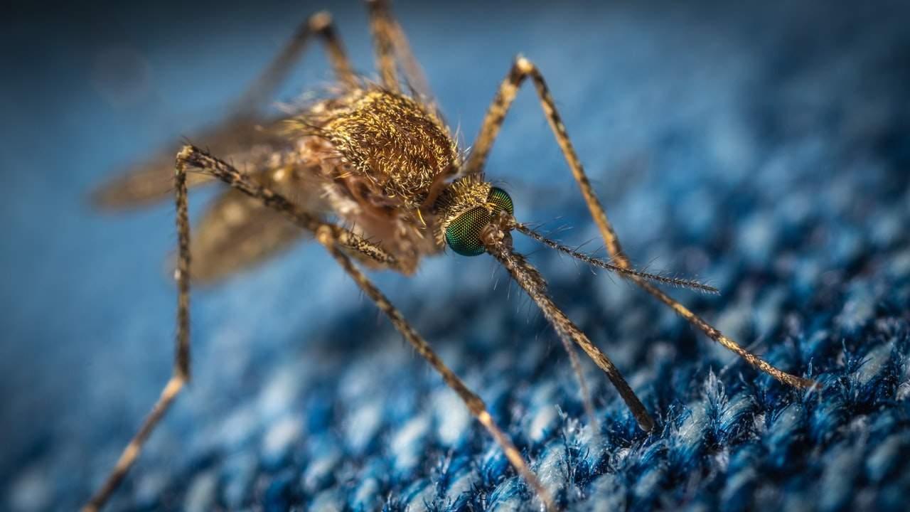 Как избавиться от комаров в квартире: от современных до народных средств